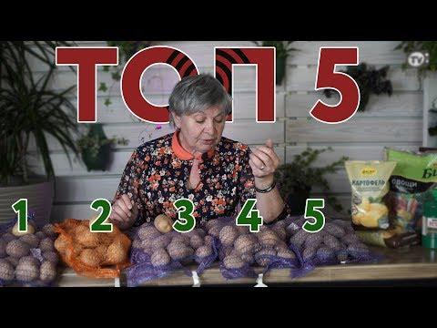 Топ 5 Сортов Картофеля И НОВИНКИ Картофеля 🥔  Идеальный Картофель 🥔 Советы от Хитсад ТВ