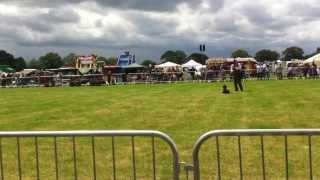 Funny Gun Dog Training At The Cheshire Show 2011