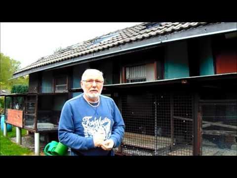 Taubenschlag Zu Verkaufen 2017