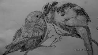realistic birds draw