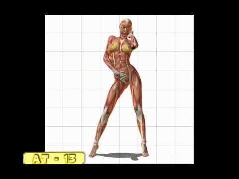 Female muscle anatomy.AVI - YouTube