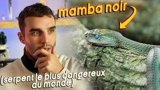 Face à Face avec un black mamba ! (le plus dangereux serpent du monde)
