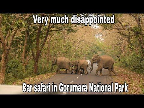Car safari in Gorumara National Park | Jungle Safari |