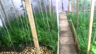як зробити з ріпчастої цибулі квітка
