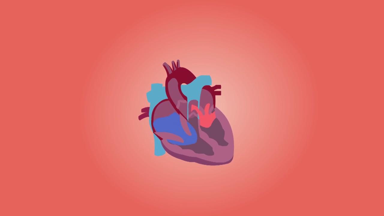 Cardiology #cardiology
