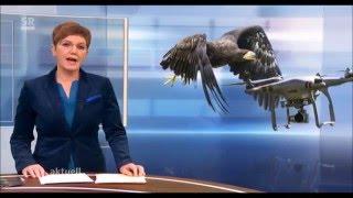 Adler fängt Drohne -  eagle catches drone