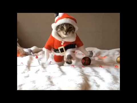 Best Funny Cats & Dogs video 2016 & 2017