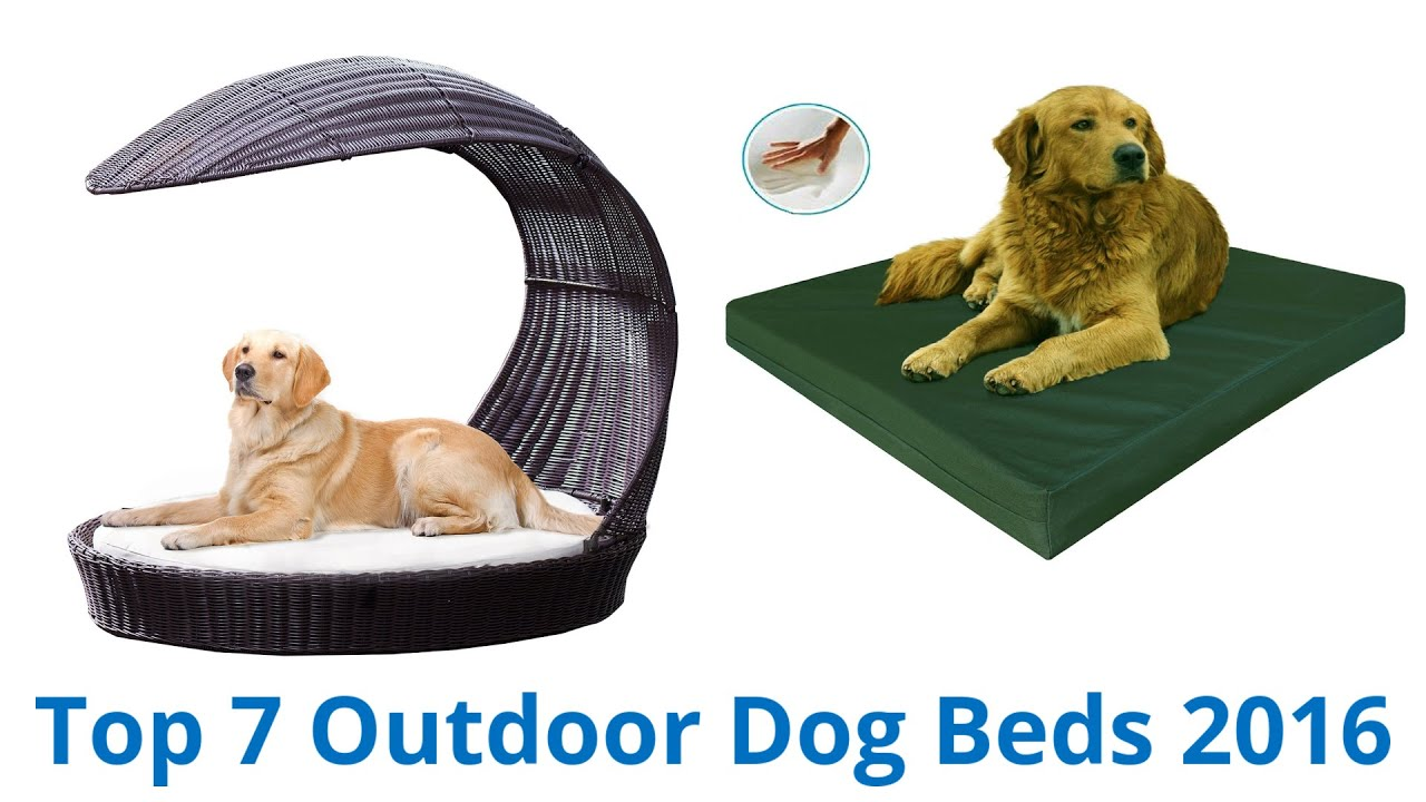 7 Best Outdoor Dog Beds 2016 You