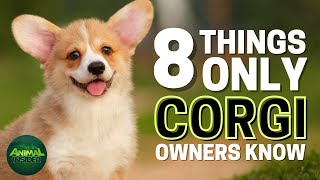 8 Things Only Pembroke Welsh Corgi Dog Owners Understand