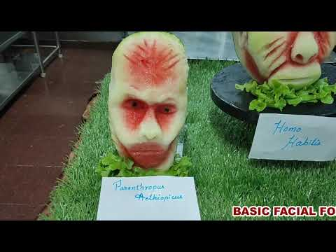 basic-facial-forms-in-watermelon