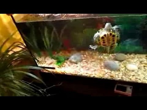 turtle tank filters -