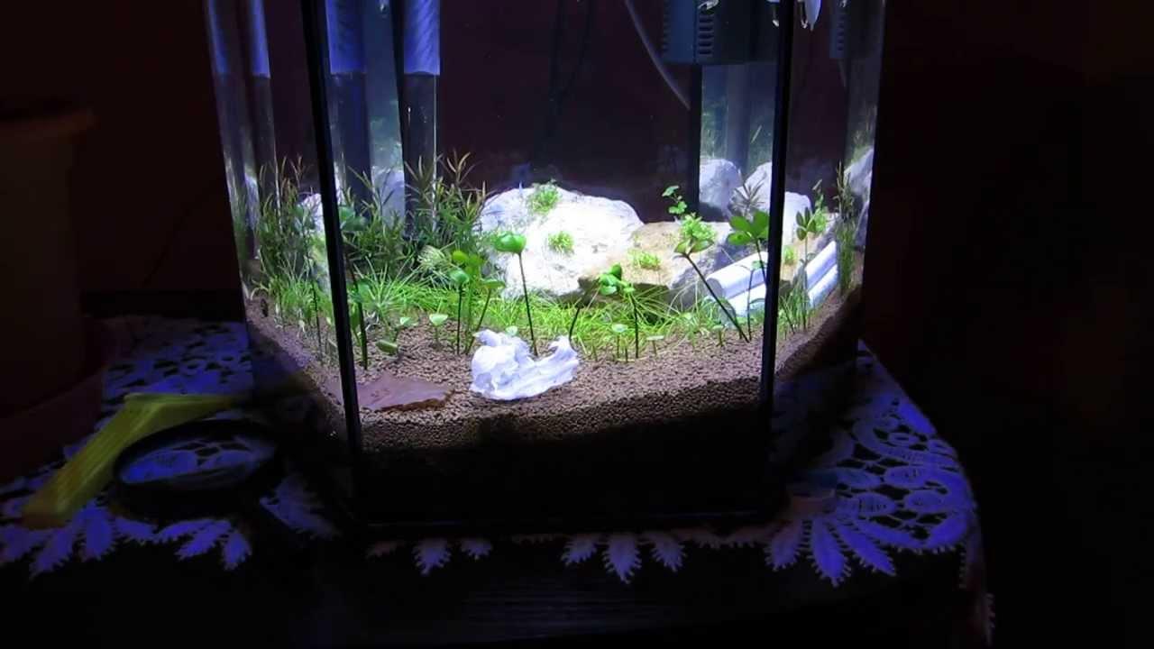 Oświetlenie Akwarium Power Led Youtube