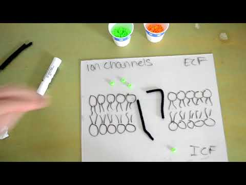 Ion Channels!