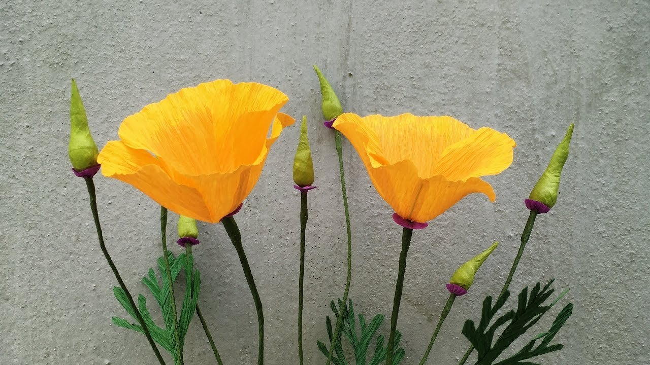 Abc tv how to make california poppy paper flowers from crepe paper abc tv how to make california poppy paper flowers from crepe paper craft tutorial mightylinksfo