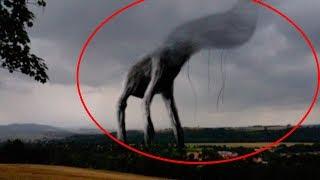 10 Гигантских Страшных Монстров, Снятых На Камеру cмотреть видео онлайн бесплатно в высоком качестве - HDVIDEO