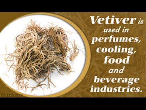 vetiver-essential-oil