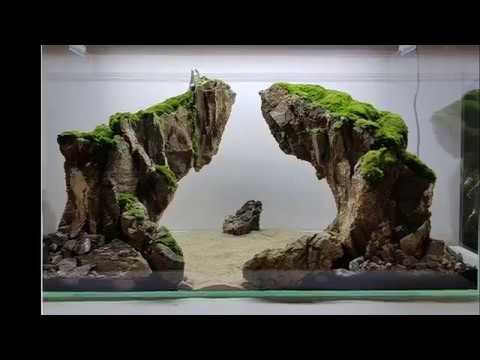 Aquascaping with Ancient Stone by Aquaman Nature Studio in a