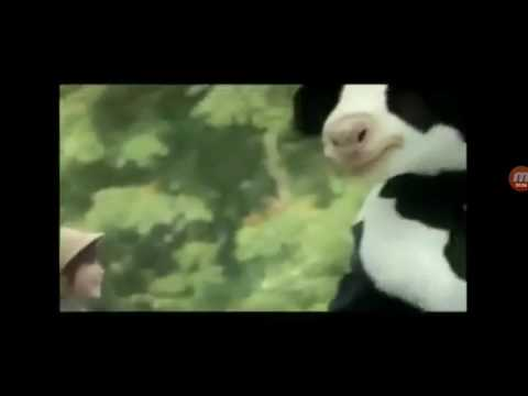 Các bạn còn nhớ không quảng cáo sữa bò vinamilk