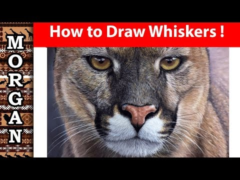 How to draw whiskers with pastel pencils