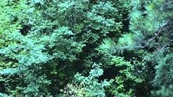EGOLAND - Ausgeloggt (offizielles Musikvideo)