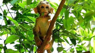 Cute baby Lola starts to learn climbing on the tree,  Lola is very active now