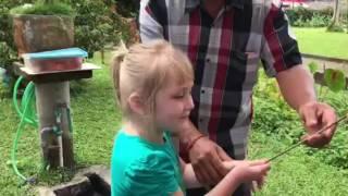 Огромные летучие собаки на острове Бали
