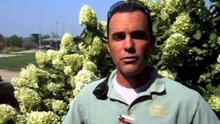 Idaho Botanical Garden's Toby's Tips: Hydrangeas