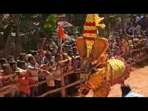 ಭಾಷಿ ಹೋರಿ ಹಬ್ಬ_ಹೋರಿ ಹಬ್ಬ_Bhashi Hori Habba_