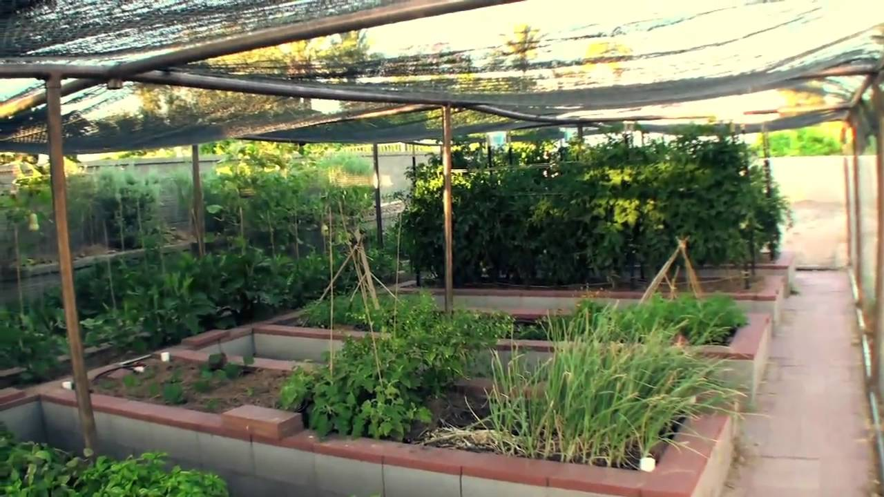 Vegetable Garden in Phoenix - YouTube