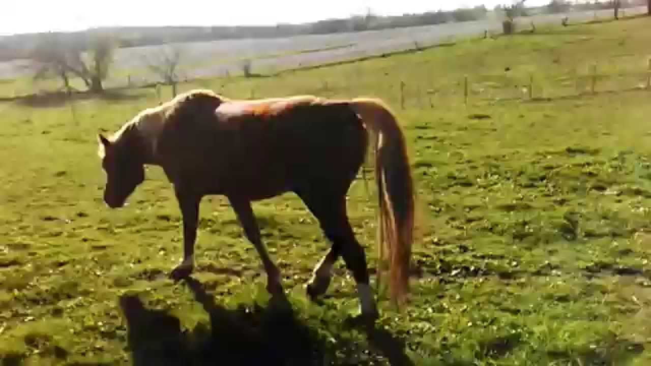 Funny Farting horse budlight comercial. - YouTube  |Funny Horse Farts