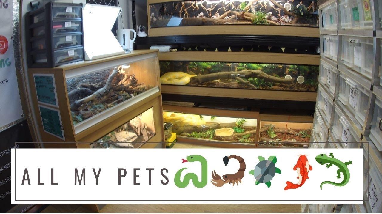 ALL MY PETS VIDEO 55+ animals | Nepali Snake collection / Snake keeper | Nepali Vlog