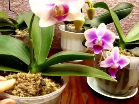 Перестал расти цветонос у орхидеи. Выход найден!