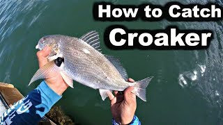 How to Catch CROAKER - San Diego Bay Fishing