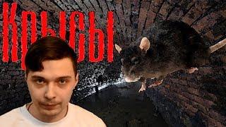 [О фильме] Крысы