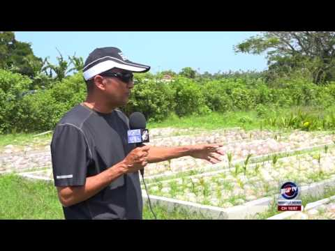 COCONUT INDUSTRY ON THE RISE