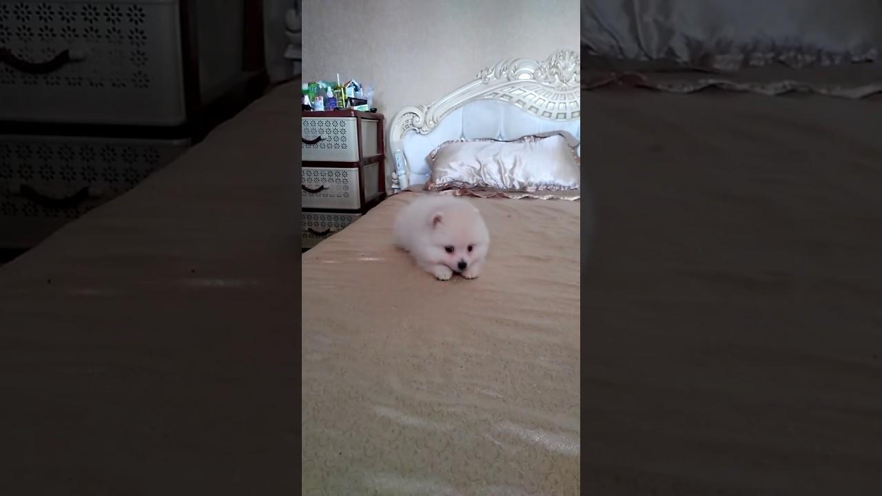 Щенки Хаски!) - YouTube