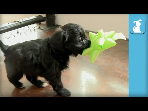 Ridiculous Puppy Keeps Spinning In Circles! - Puppy Love