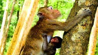 Best clip Amari bring baby Lori on tree cos her baby hurt full body , Lori sad much & no power