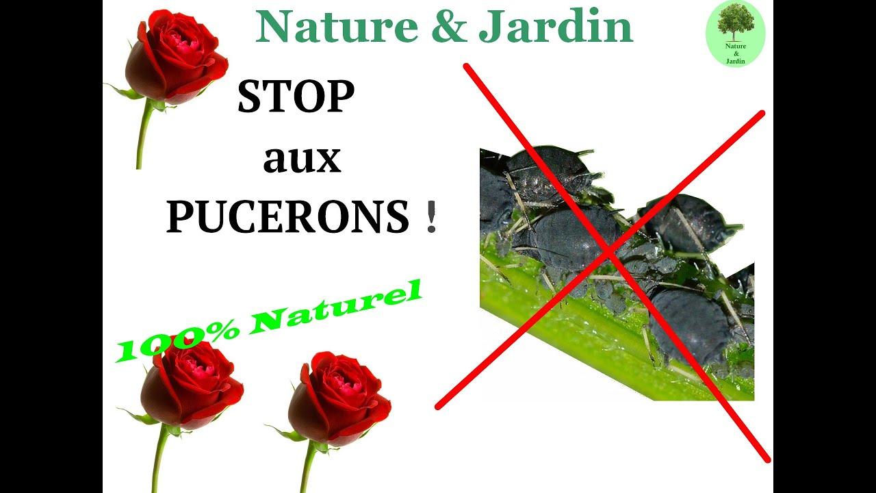 Bicarbonate De Soude Contre Les Pucerons stop aux pucerons! une solution 100% naturel !