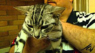 International Cat Association Cat Show 2010 - Kelowna