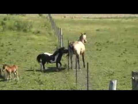 Miniature Pony  - Up to a big challenge