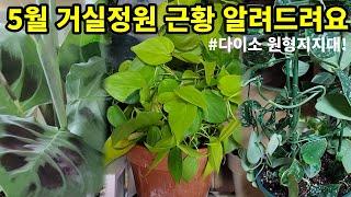 거실정원 관엽식물종류 …