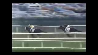 Secretariat's Progeny Win the Belmont Stakes