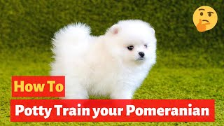 How to easily potty train Pomeranians? Easy yet Effective Training method