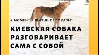 Странная собака разговаривает сама с собой / Фраза