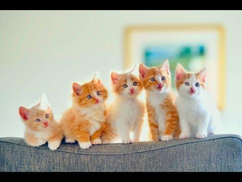 Милые котики. Cute cats.