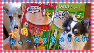 猫用おやつとして大人気の『ちゅ~る』に犬用が登場! 食べてみました♪ ...