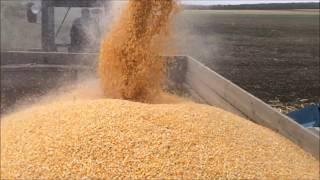 Уборка кукурузы 2017 часть1