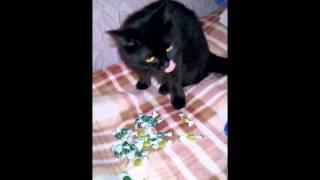 Кошка выбирает конфеты.