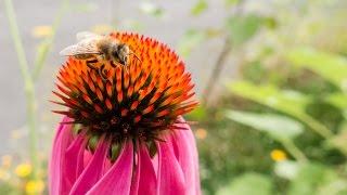 Meet the Beekeeper trailer 2 [USA]
